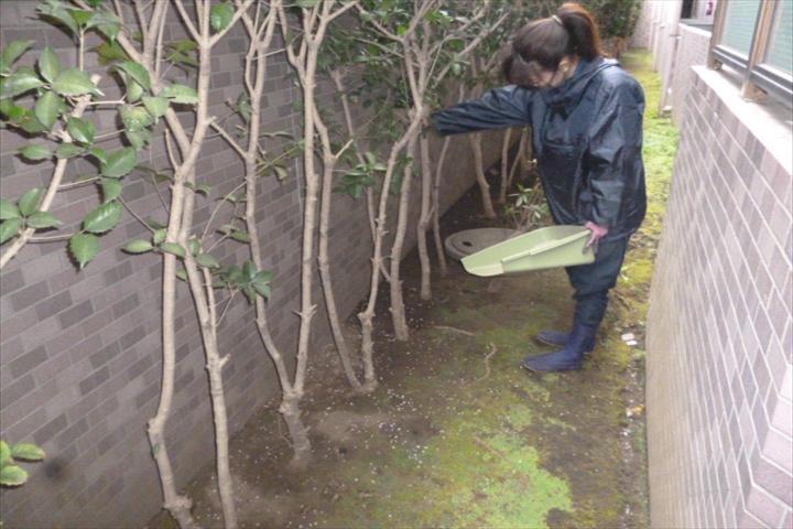 施工事例|マンション年間管理施肥