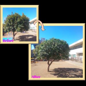 稲葉造園|保育園(植栽管理)2月