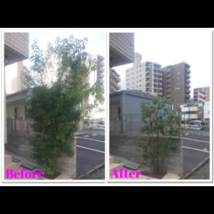 アパート剪定001-2