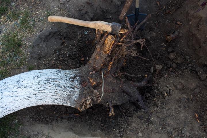 伐根/抜根(立ち木を伐採したあとに残る切り株を取り除くこと)のご依頼は稲葉造園へ
