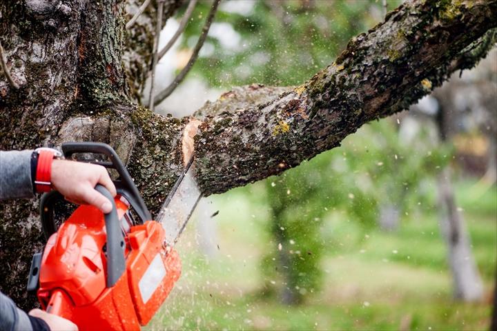 伐採(庭木の根っこは残したまま根元を切ること)のご依頼は稲葉造園へ