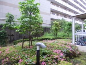 202105マンション年間管理01|稲葉造園