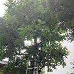 施工事例_2105植栽管理|稲葉造園