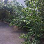 202105駐車場|稲葉造園